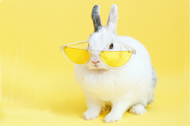 Osterhase mit Sonnenbrille in gelb